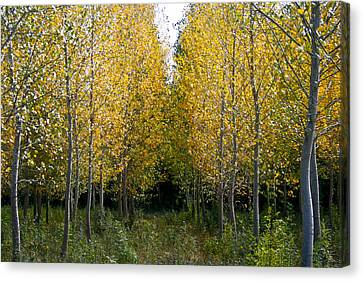 Yellow Autumn Trees In France  Canvas Print by Georgia Fowler