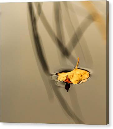 Yellow Birch Leaf On Water Canvas Print by Aldona Pivoriene