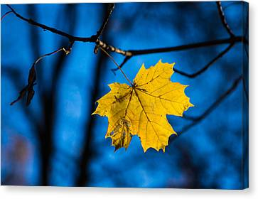 Yellow Blues - Featured 3 Canvas Print by Alexander Senin