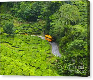 Yellow Bus Canvas Print by Patricia Hofmeester