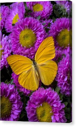 Yellow Butterfly And Pink Flowers Canvas Print by Garry Gay