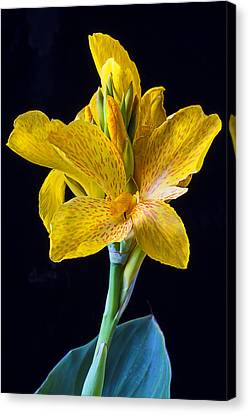 Yellow Canna Flower Canvas Print by Garry Gay