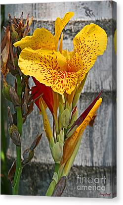 Yellow Canna Lily Canvas Print by Kenny Bosak