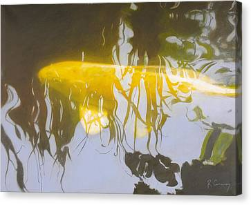 Yellow Carp In The Morning Canvas Print by Robert Conway