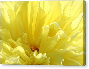 Yellow Dahlia Burst Canvas Print by Ben and Raisa Gertsberg