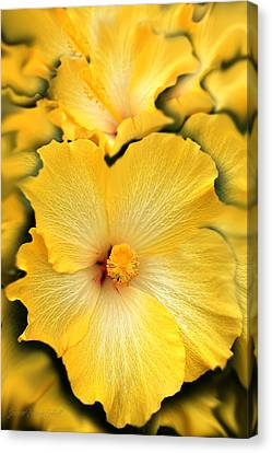 Yellow Fantasy Hibiscus Flowers Canvas Print by Jennie Marie Schell