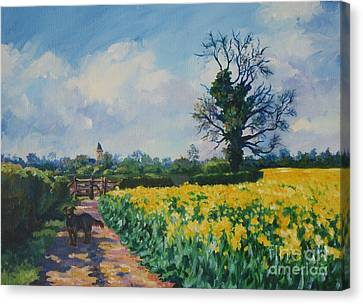 Yellow Field And Rex Canvas Print by John Clark