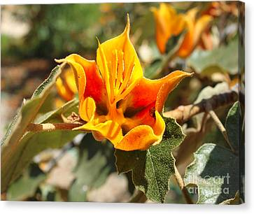 Yellow Flower Canvas Print by Gregory Dyer