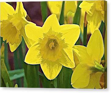 Yellow Flower Iris Canvas Print by David Letts