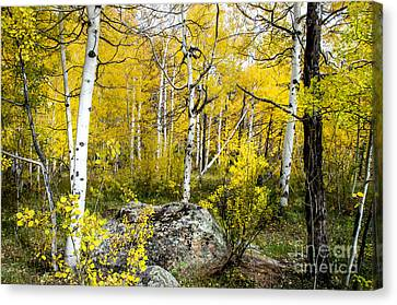 Yellow Forest Canvas Print by Baywest Imaging