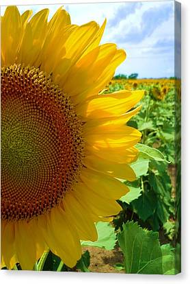 Yellow Glory #2 Canvas Print by Robert ONeil