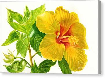 Yellow Hibiscus Flower Canvas Print by Sharon Freeman