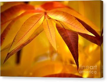 Yellow Leaves At Dawn Canvas Print by Deb Halloran