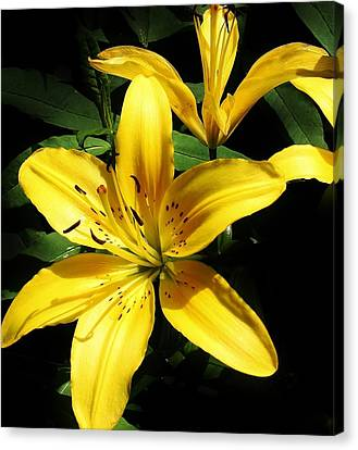 Yellow Magic Canvas Print by Bruce Bley