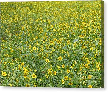Yellow Meadow Canvas Print by Joshua Bales