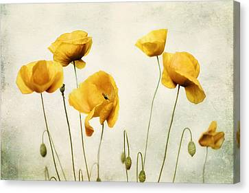 Yellow Poppy Photography - Yellow Poppies - Yellow Flowers - Olive Green Yellow Floral Wall Art Canvas Print by Amy Tyler