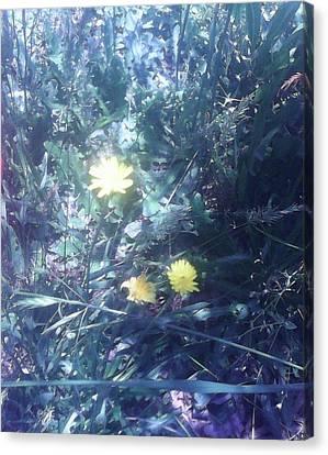 Yellow Canvas Print by Raymond Arrington