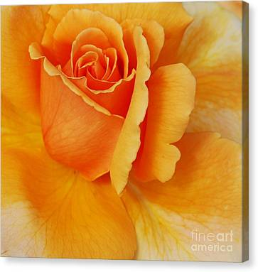 Yellow Rose Canvas Print by Kathleen Struckle