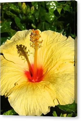 Yellow Tropical Flower  Canvas Print by Shaun Maclellan