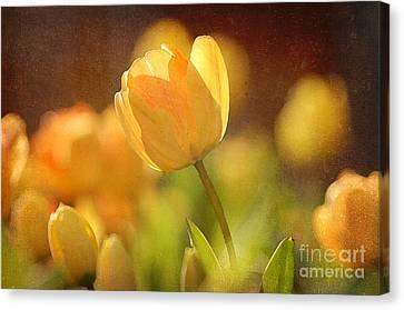 Yellow Tulips Canvas Print by Bedros Awak