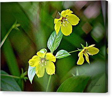 Yellow Wildflowers Canvas Print by Zelma Hensel