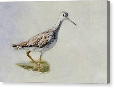 Yellowlegs Canvas Print by Bill Wakeley