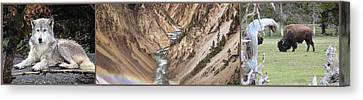Yellowstone National Park Montana  3 Panel Composite Canvas Print by Thomas Woolworth