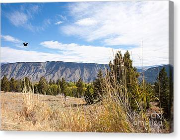Yellowstone View Canvas Print by Cindy Singleton