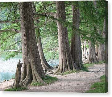Yesterday's Trees Canvas Print by Wendy J St Christopher
