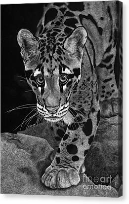 Yim - The Clouded Leopard Canvas Print by Sheryl Unwin