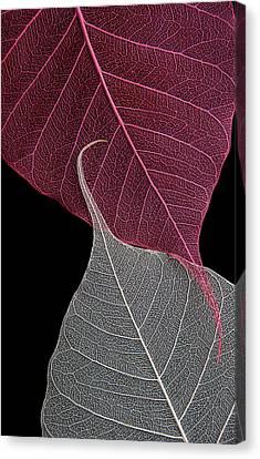 Yin-yang  Canvas Print by Maggie Terlecki