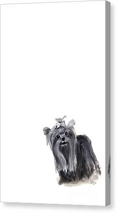 Yorkshire Terrier Canvas Print by Barbara Marcus