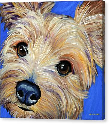 Yorkshire Terrier Canvas Print by Melissa Smith
