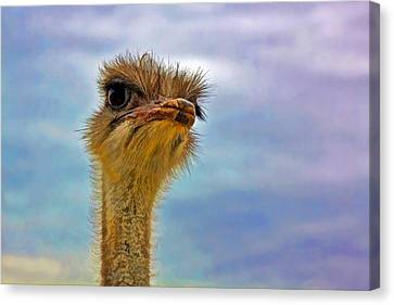 You Talkin To Me Canvas Print by Gary Holmes