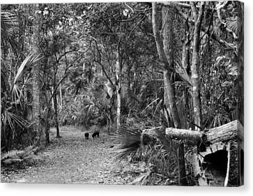 Young Boar. Highlands Hammock S.p Canvas Print by Chris  Kusik