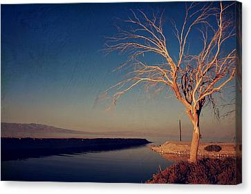 Your One And Only Canvas Print by Laurie Search