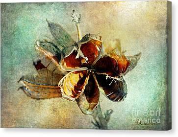 Yucca Pod - Barbara Chichester Canvas Print by Barbara Chichester