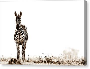 Zebra Facing Forward Washed Out Sky Bw Canvas Print by Mike Gaudaur