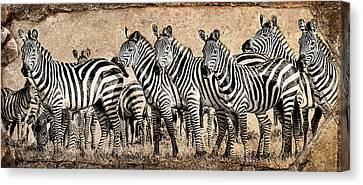 Zebra Herd Rock Texture Blend Canvas Print by Mike Gaudaur