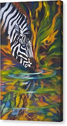 Zebra Canvas Print by Kd Neeley
