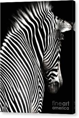 Zebra On Black Canvas Print by Elle Arden Walby