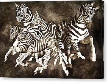 Zebras Canvas Print by Betsy Knapp