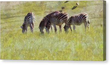 Zebras In Africa Canvas Print by Dan Sproul