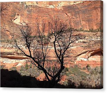 Zion Canyon Tree #1 Canvas Print by Feva  Fotos
