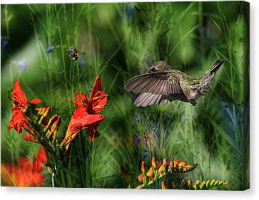 Zip-a-dee-doo-dah Canvas Print by Donna Kennedy