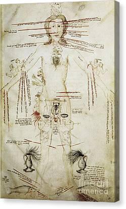 Zodiacal Man, 15th Century Canvas Print by Spl