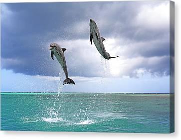Delfin (grosser Tuemmler) Canvas Print by Tier Und Naturfotografie J und C Sohns