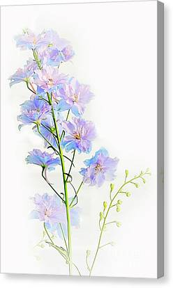 Early Summer  Canvas Print by Elaine Manley