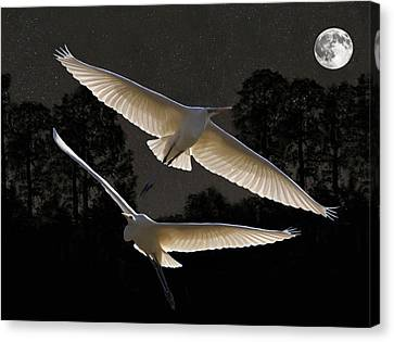Majestic Great Egrets  Canvas Print by Eric Kempson