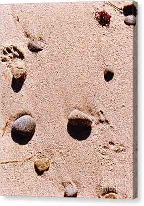 Paws On The Beach Canvas Print by Phyllis Kaltenbach